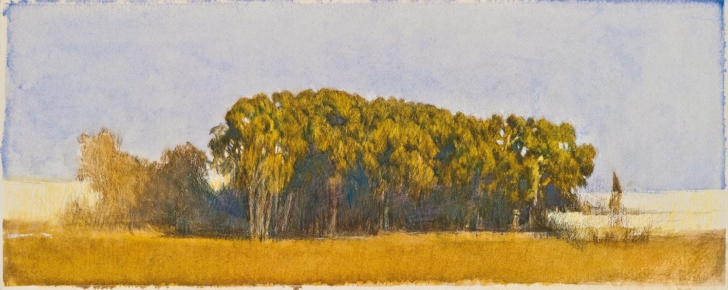 578d479abaf2 Nathalia Laue │ Bild  Fila di alberi sulla via pontina