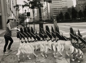 Walking the Baby + the Dog. West Street
