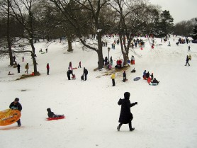 Breugel's Snow Kids. Central Park